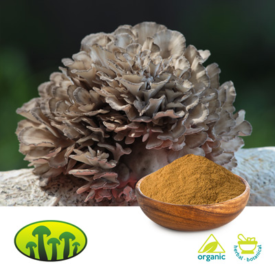 Organic Maitake Powder by Zhejiang Biosan Biotech Co., Ltd.
