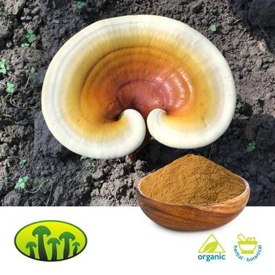 Organic Reishi extract 15:1 by Zhejiang Biosan Biotech Co., Ltd.