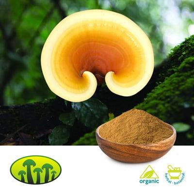 Organic Reishi Powder by Zhejiang Biosan Biotech Co., Ltd.