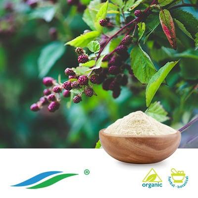 Organic Sweet Tea Leaf Extract 70% Rubusoside HPLC by Hunan NutraMax Inc.
