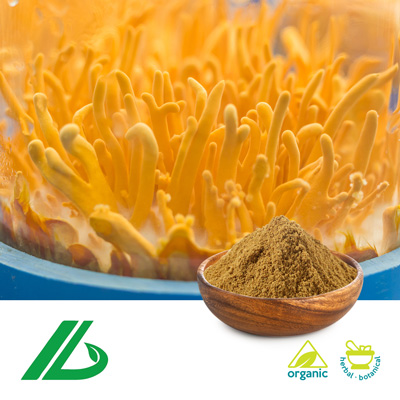 Organic Cordyceps Militaris Extract 30% Beta Glucan (25kg Drum) by Xian Laybio Natural Ingredients Co., Ltd