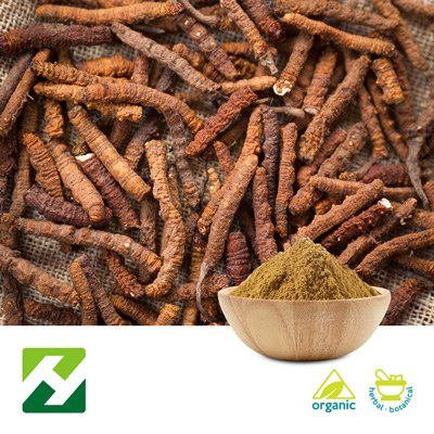 Organic Cordyceps Sinensis Extract 40% Polysaccharides (25kg Drum) by Organic Herb Inc.
