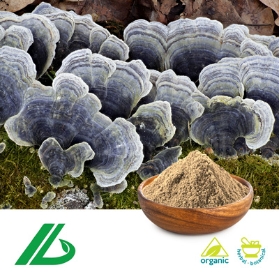 Organic Coriolus Versicolor Extract 30% Beta Glucan (25kg Drum) by Xian Laybio Natural Ingredients Co., Ltd