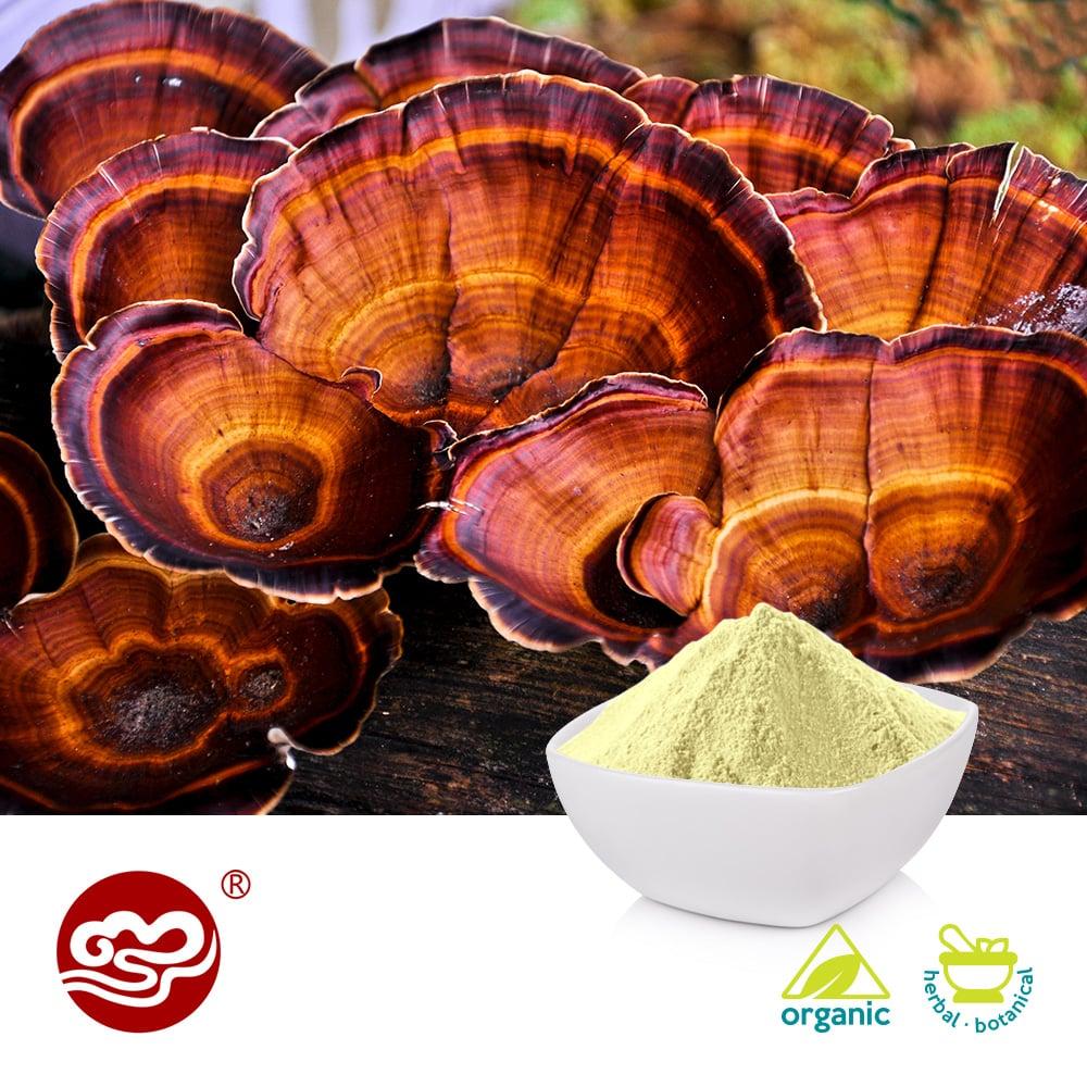 Organic Ganoderma lucidum Extract Powder Grade A by Fujian Xiangzhilou (GanoHerb)