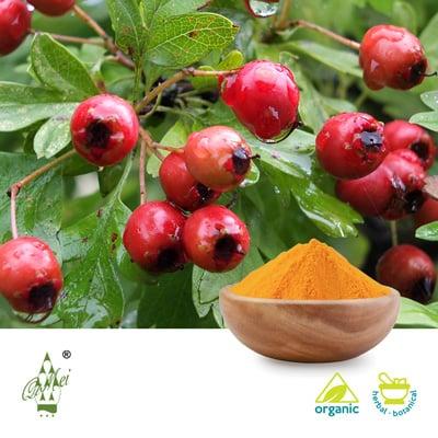 Organic Hawthorn Juice Powder by Qimei Industrial Group Co.,Ltd