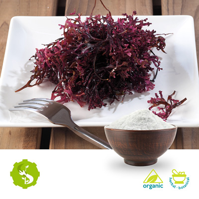 Organic Irish Moss Powder by Hunan Essence Biotech Co.Ltd