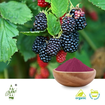 Organic Mulberry Juice Powder by Qimei Industrial Group Co.,Ltd