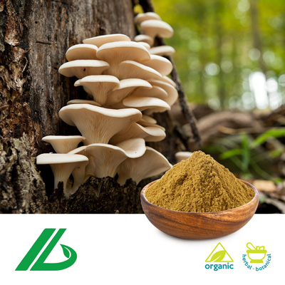 Organic Oyster Mushroom Extract 30% Glucan (25kg Drum) by Xian Laybio Natural Ingredients Co., Ltd