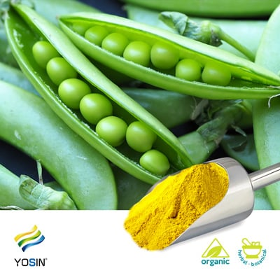 Pea Protein Isolate 80% (Organic) by Yosin Biotechnology(Yantai)Co.,Ltd.