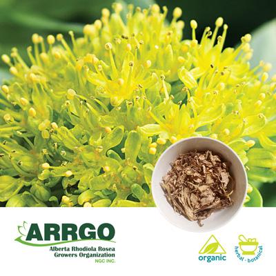 Organic Rhodiola Rosea Dried Chips ( 0.6-0.8% Rosavins) by Arrgo