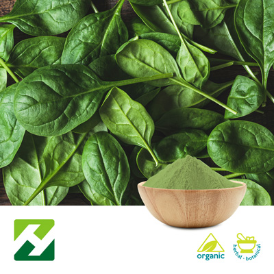 Organic Spinach Extract 10:1 (25kg Drum) by Organic Herb Inc.