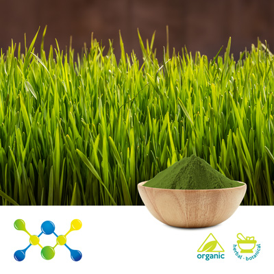 Organic Wheat Grass Powder  (Irradiated) by Shaanxi Undersun Biomedtech Co., Ltd