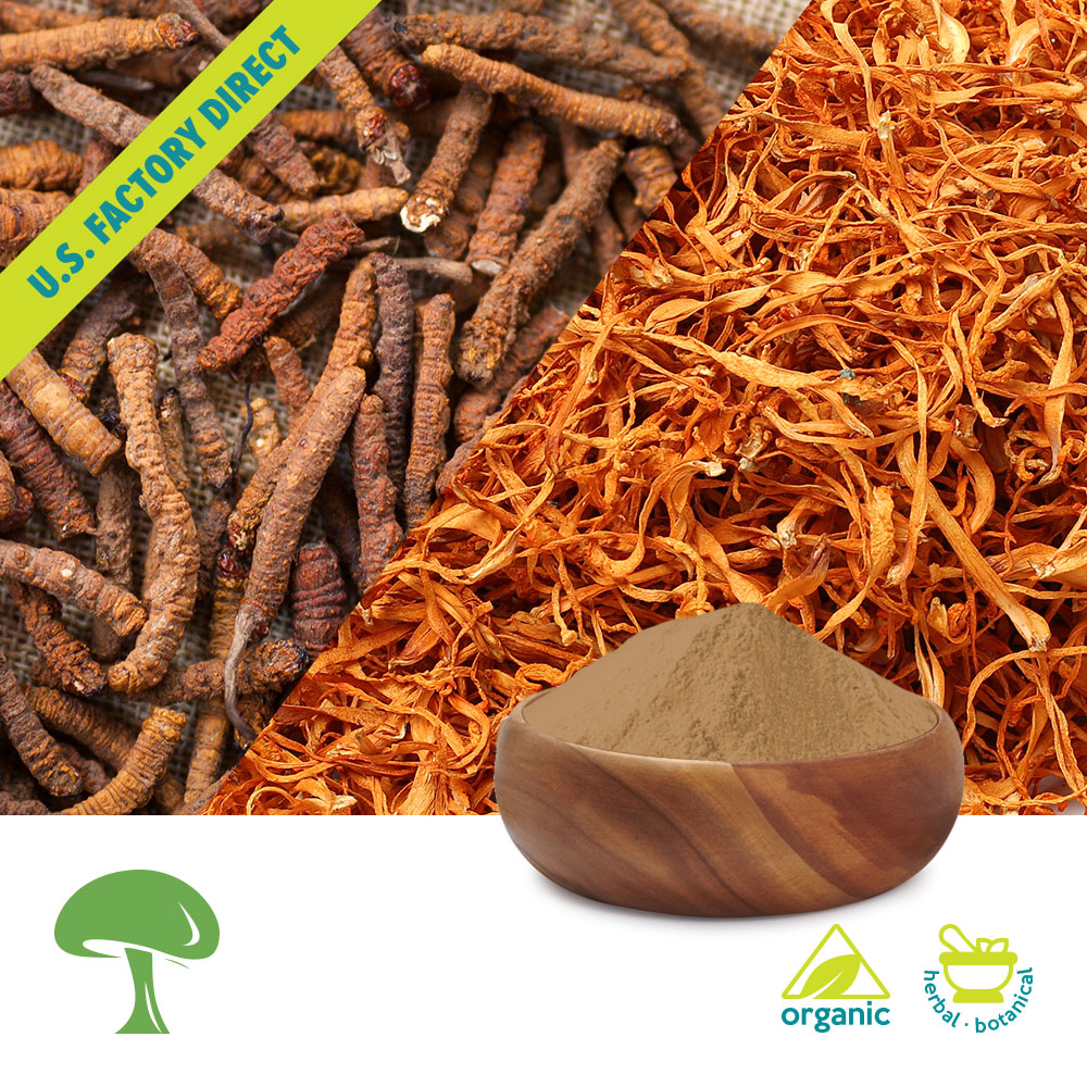 Organic Cordyceps Super Extract by Aloha Medicinals