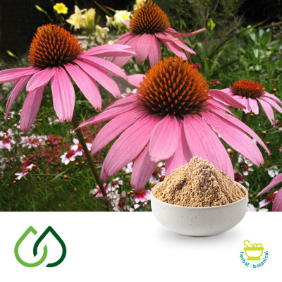 Purple Coneflower 4:1 Dry Extract by Plantex