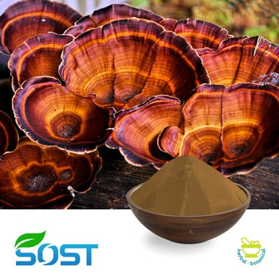 Reishi Extract 50% Polysaccharide by Xi An Sost Biotech Co., Ltd