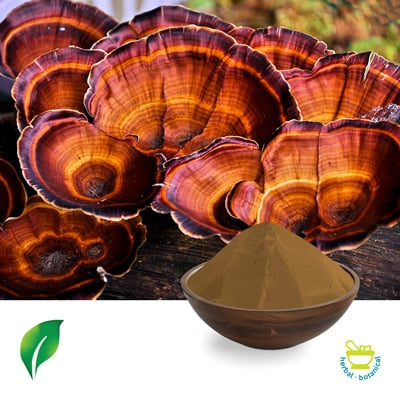 Reishi Mushroom P.E 35%(Sporocarp) by Sunnycare