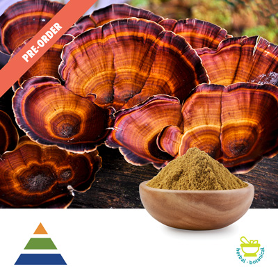 Reishi Extract 30% Polysaccharides UV (25kg Drum) by Shaanxi Kingsci Biotechnology Co., Ltd
