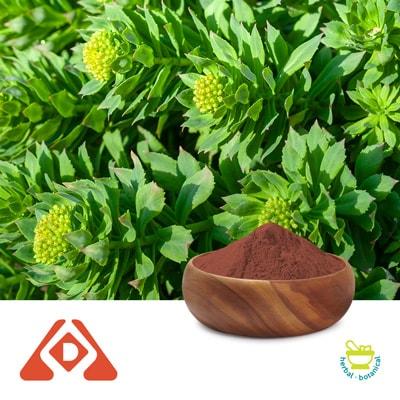 Rhodiola P.E.3% Salidroside HPLC by Shaanxi Hongda Phytochemistry Co., Ltd