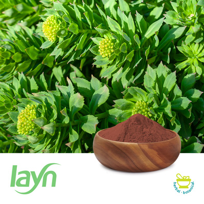 Rhodiola Rosea P.E. 3% Rosavins/ 1% Salids by Guilin Layn Natural Ingredients Inc.