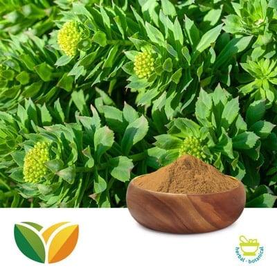 Rhodiola P.E. 3% Salidroside by Tianhua Pharmaceutical