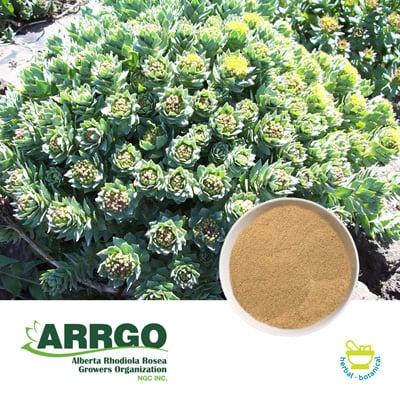 Rhodiola Rosea Root (1.0% Rosavins) (Milled) by ARRGO