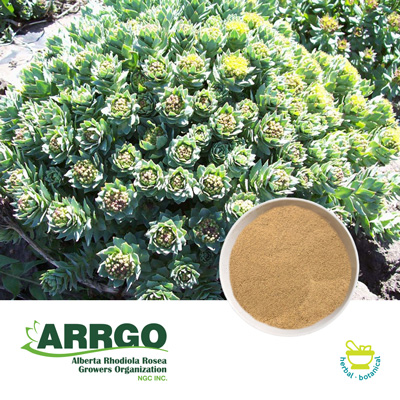 Rhodiola rosea root (0.8-1.0% Rosavins) (Milled) by ARRGO