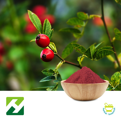 Rosehip Extract 10%VC HPLC (25kg Drum) by Organic Herb Inc.