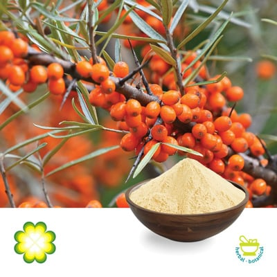 Sea Buckthorn Berry P.E. 5% Flavone by Xi'An Rainbow Biotech Co., Ltd