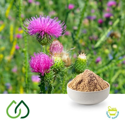 St. Mary's Thistle  4:1 Dry Extract by Plantex Sas