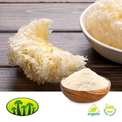 ORG Tremella fuciformis Powder by Zhejiang Biosan Biotech Co., Ltd.