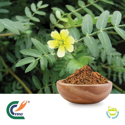 Tribulus P.E 45% Saponins by TRG
