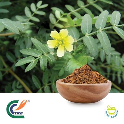 Tribulus P.E. 95% Saponins by Hanzhong Trg Bioctech Co., Ltd.