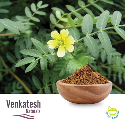 Tribulus P.E. 20% Saponins by Venkatesh Naturals