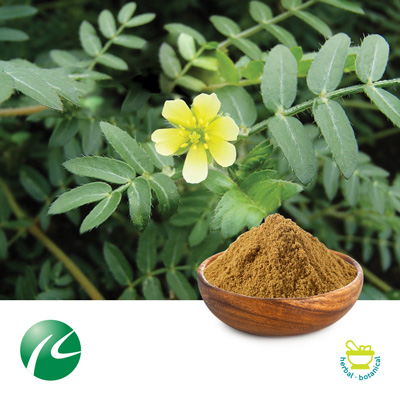 Tribulus Terrestris Extract 45% Saponins by UV by Hunan Huakang Biotech Inc.,