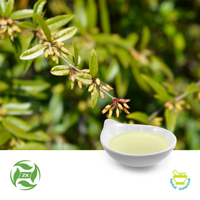 Wintergreen Oil (25kg Drum) by Ji'An Zhongxiang Natural Plant Co., Ltd