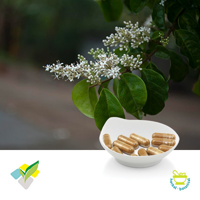 Resveratrol Plant Hard Capsule 500mg by Runxin Biotech