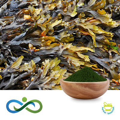 Seaweed Powder by Shandong Premium Select Foods